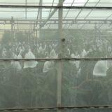 マンゴーカフェ 木の葉