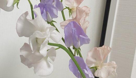 花に癒される日🌷